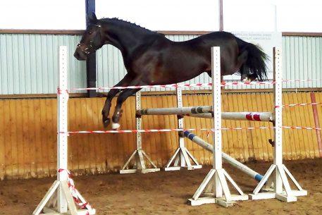 cornettus-jump-no-4
