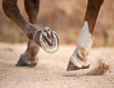 Zirgu nagu kopšana - profesionālās pilnveides programma Bebrenē