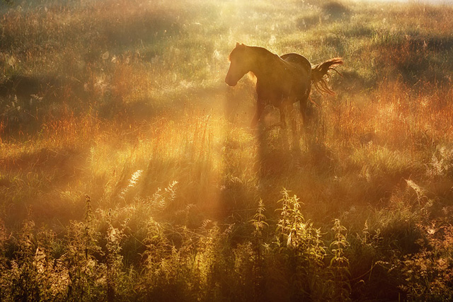 Beautiful-Horse-in-Sun