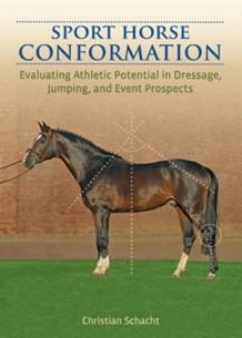 Sport-Horse-Conformation-30